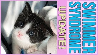 (UPDATE!) Little Kitten with Swimmer Syndrome LEARNS TO WALK!