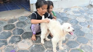 lovely baby girl want to make best friend with group cute dogs.