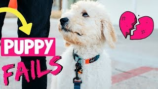 5 New Puppy Mistakes // Goldendoodle Training Tips! 🌟