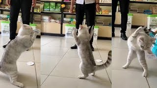 Funny Cat Tape on Paws  – Cat Reaction to Sticky Tape
