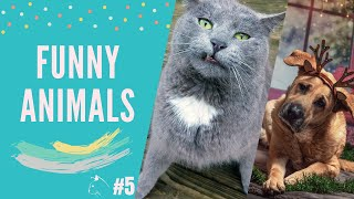 FUNNY&CRAZY ANİMALS COMPİLATİON 2020/CUTE CATS-KİTTEN/ TRY TO NOT LAUGH