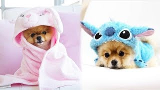 ♥Cute Puppies Doing Funny Things 2020♥ #9  Cutest Dogs
