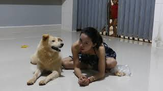 LOVELY SMART GIRL PLAYING BABY CUTE DOGS AT HOME HOW TO PLAY WITH DOG & FEED BABY DOGS #8