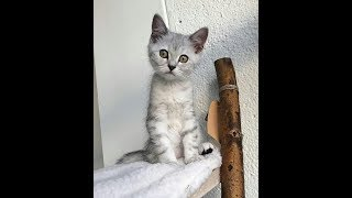 Funny cats and Funny moments Compilation #31   2020   by animalplus