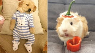 Baby Animals 🔴 Funny and Cute Dogs and Cats Videos Compilation (2019) Perros y Gatos Recopilación