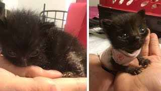 Rescue Tiniest Malnourished Kitten
