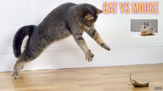 |cute paws|Funny Cat Reaction to Mouse – Tom and Jerry Real Life