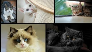 AWW – Funny And Cute Cats Compilation | Pet Paws Video 2020 | Meow | Persian cat