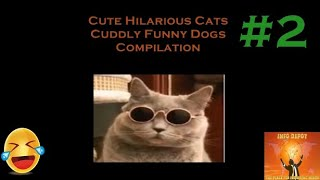 Cute Hilarious Cats Cuddly Funny Dogs Compilation #2