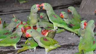 Funny Parrots Videos Compilation cute moment in Pet birds part 1