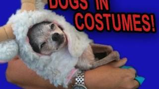 600 Cute Dogs in Costumes!