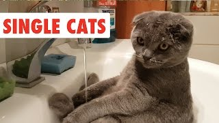 Single Cats | Funny Cat Video Compilation 2017