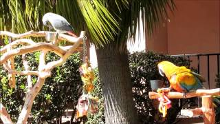 Funny  Parrots – Birds Talking to Each Other