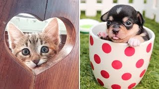 Cute Dogs and Cats Doing Funny Things #30 | Funny Cute Animals