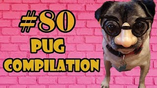 2018 ! Pug Compilation 80 – Funny Dogs but only Pug Videos mIX 53-54 | Instapugs