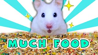 HAMSTER Food Challenge | Funny HAMSTER | Many FOODS for Hamster!