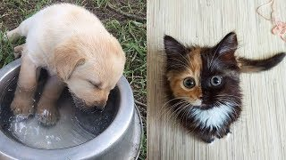 ♥Cute Dogs and Cats Doing Funny Things 2018♥ #105 – CuteVN