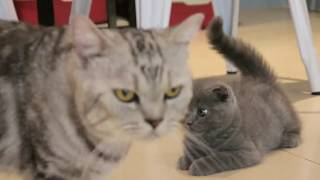 Baby Cats – Cute and Funny Cat Videos Compilation #22   Kitten Mew