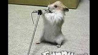 *****vERY fUNNY hAMSTERS 1*****