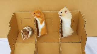 New Hamster Race From Cardboard For Three Cute Hamsters – Hamster Tina, Anna & Hamster Bez