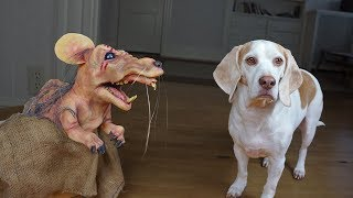 Dogs vs Mutant Mouse: Funny Dogs Maymo, Potpie & Penny