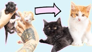 SO RELAXING: Watch kittens grow up in 10 minutes!