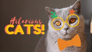 CUTE Cats Compilation Best Cute cat videos ever