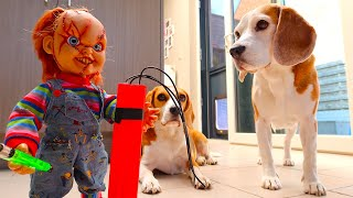 Dogs vs Child's Play Chucky Prank 2  : Funny Dogs Louie & Marie