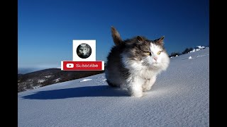 Funny Cats – Funny And Cute Cat Videos Compilation 2020 |Funk