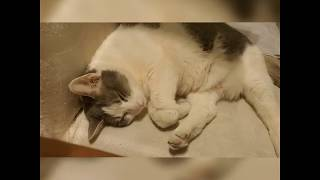 Cute Cats sleeping and dreaming 🥰😅 WATCH HER STOMACH SHAKING WHEN THE COLORS COME ON..