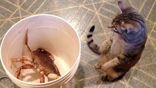 You'll LAUGH FOR SURE! – Best FUNNY ANIMALS