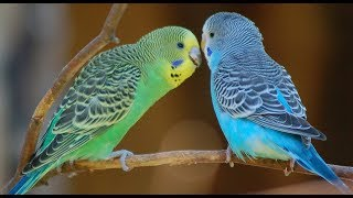 Funny beautiful parrots || Birds singing and dancing moments compilation