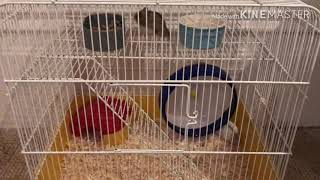 Funny Video – hamster spinning out of control and falling out on the wheel, epic fail.