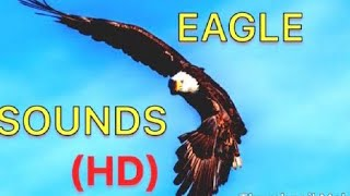 #Eagle #sounds (HQ) #animals #learning #bird #nature #cute