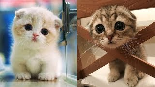😍 Too Cute Too Funny 🤣 Cute Dogs and Cats Doing Funny Things #6 – Cute Zone Video 2020