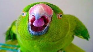 Awesome Funny birds videos compilation – Try Not To Laugh Challenge Hardest