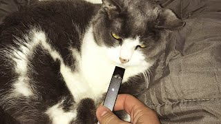 CATS VS TECHNOLOGY COMPILATION 2020 | FUNNY CAT VIDEOS