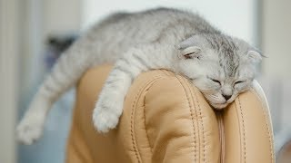 Funny Cats Sleeping in Weird Positions Compilation