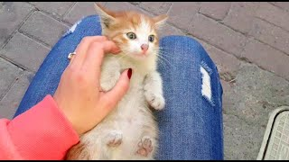 Spending a Day with Cats Gives you Happiness (Cute Cats – Cute Kittens)