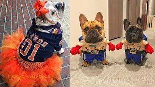 Baby Dogs Cute and Funny Dog Videos | Cutest French Bulldog puppy compilations