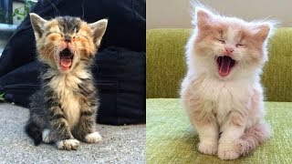 💗OMG! – Funny and Cute Dog and Cat Compilation 2020💗 #43 – CuteVN
