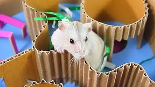 Chip Toto And Mochi Hamsters Playing In 6 Levels Cake Maze