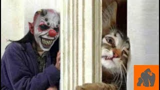 Funny Cats Scared of Masks – Part 4