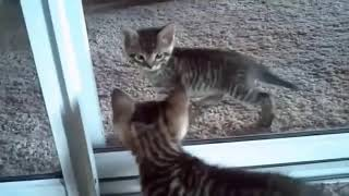 Cute and Funny Cat Compilation 7