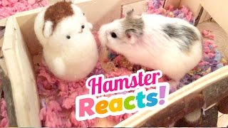 Cute Hamsters REACT to Needlefelt Versions of Themselves!