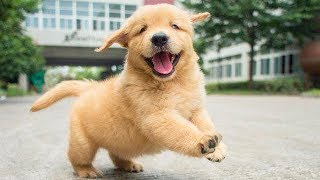 Cutest Puppies And Baby Animals – Baby Dogs | Funny Pet Animals Life | Cutest Puppies City