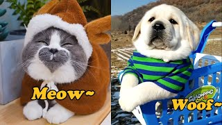 Funny and Cute Cats & Dogs Compilation😻🐶 . Adorable Pets . February . 2020 . Part01 . Cuddly TV