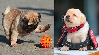 Funny & Cute French Bulldog Puppies 🐶 Cute Dogs and Cats Doing Funny Things #33