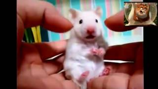 Funny hamsters Compilation NEW*