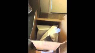 Funny Bird LOLs while Playing in a Box